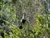 florida-29-12-09-thomas-029