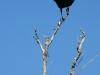florida-29-12-09-thomas-072