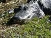 florida-29-12-09-thomas-091