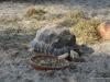 hellabrunn_2012-03-25_0202