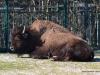 hellabrunn_2012-03-25_0280