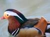 hellabrunn_2012-03-25_0308