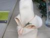 opas-bilder-von-omas-geburtstag_2012-03-04_0009