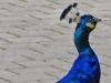 stadtpark-erding_2012-08-25_0025_bearbeitet-1