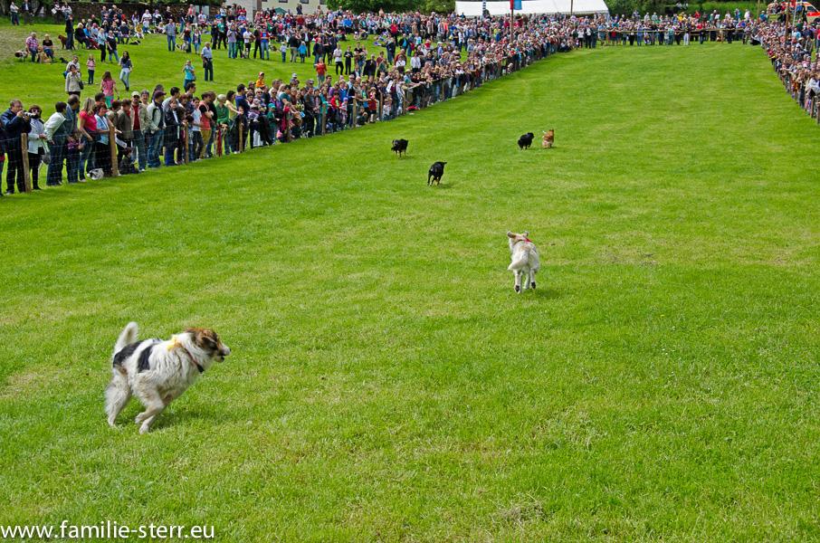 Hunderennen in Großköchlham 2013