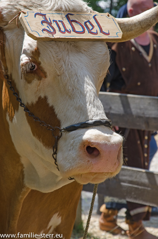 Jubel - Kuh / Kaltenberger Ritterturnier