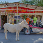 Burro in Oatman, Arizona