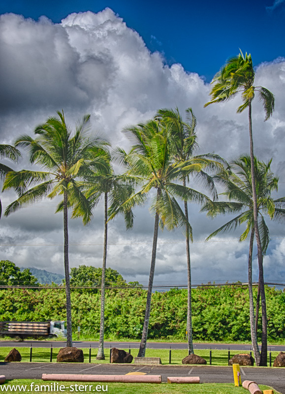 Coconut Plantation / Kapaa / Kauai