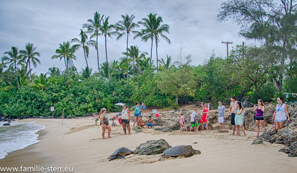 Schildkröten an der North Shore / Oahu