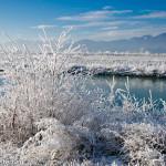 Rheinauen bei Lustenau im Winter