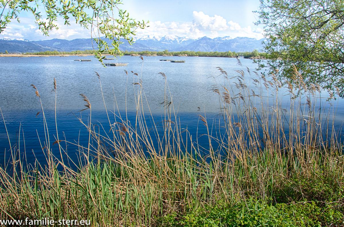 Rheindelta - Mündung Rhein - Bodensee