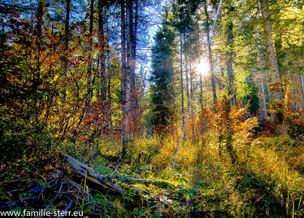 Herbstlicher Wald im Sonnenschein bei Valepp