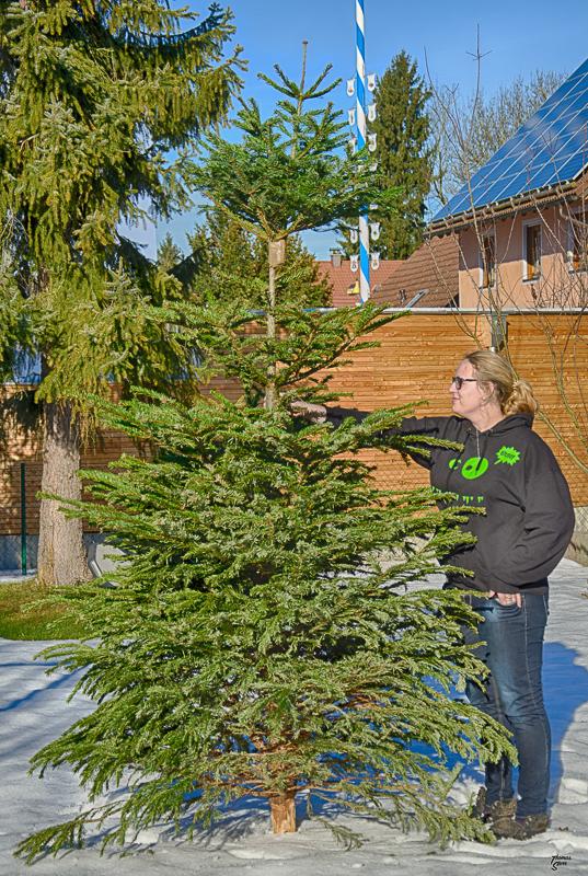 Knut - besondere Christbaumkonstruktion 2015