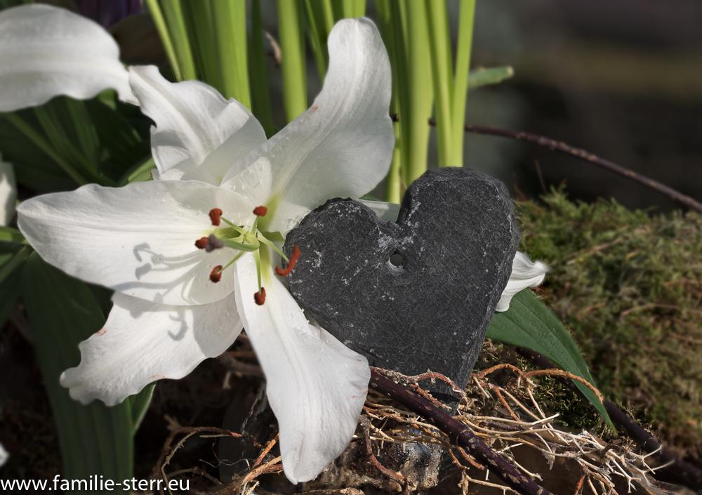 weiße Lilie von Katharinas Blumenstrauss mit Schieferherz