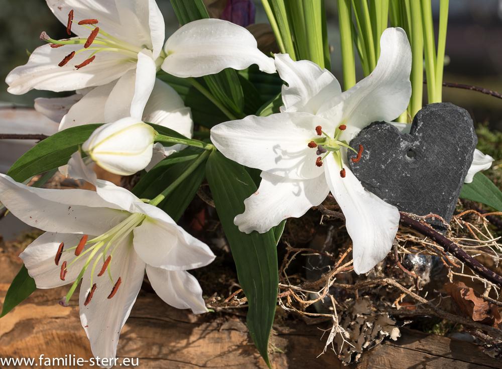 weiße Lilien von Katharinas Blumenstrauss mit Schieferherz