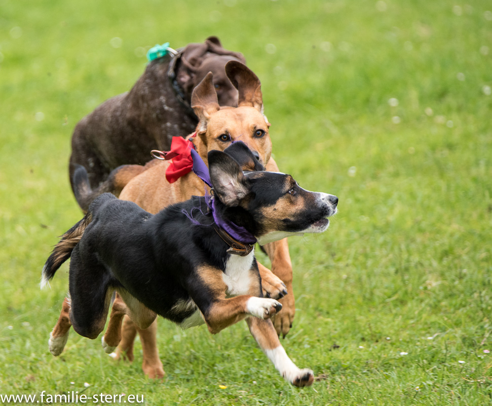 38. Hunderennen in Großköchlham / Pfingsten 2015