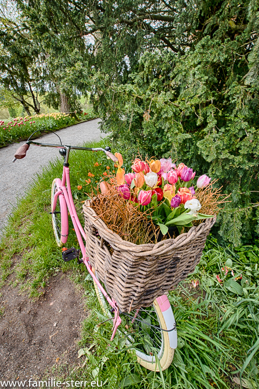 mit einem Tulpenkorb dekoriertes Hollandrad auf der Insel Mainau im Bodensee