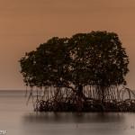 Mangrove im Sonnenuntergang auf Bali / Plateran Menjangan