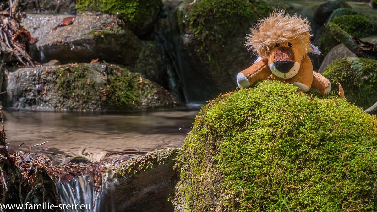 Leopold an einem kleinen Wasserfall