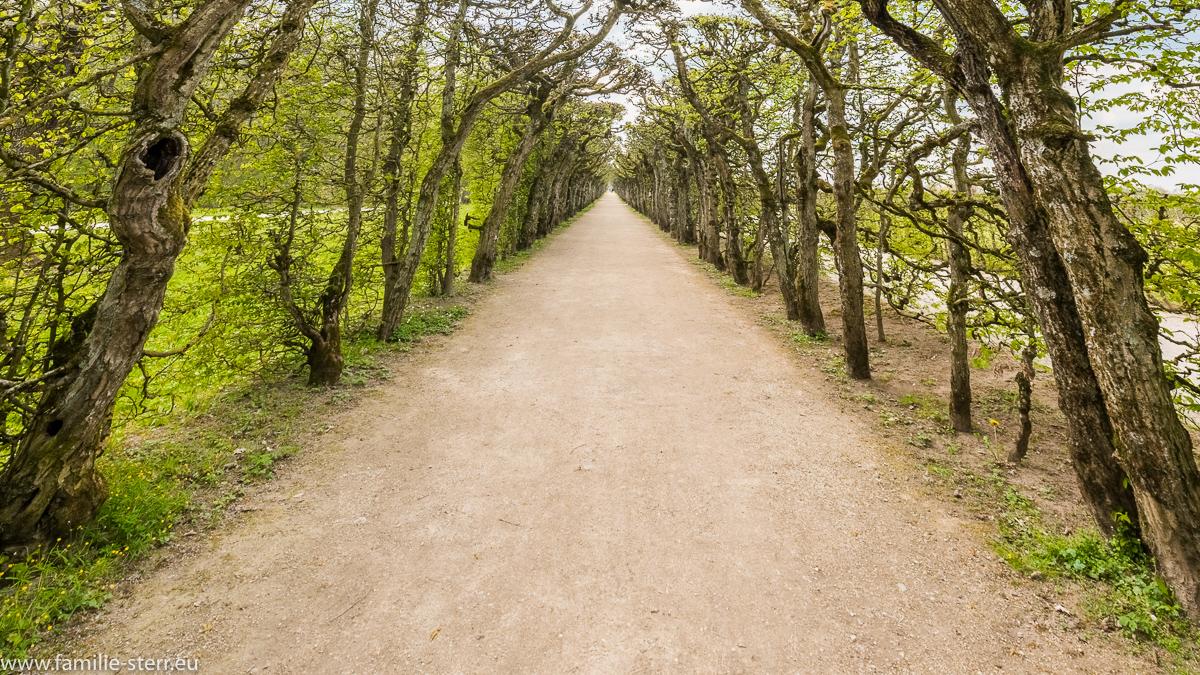 Laubengang im Garten der Wilhelmine / Eremitage Bayreuth