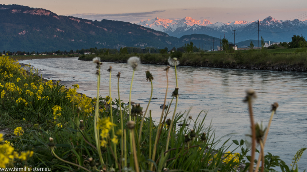 Neuer Rhein bei Lustenau