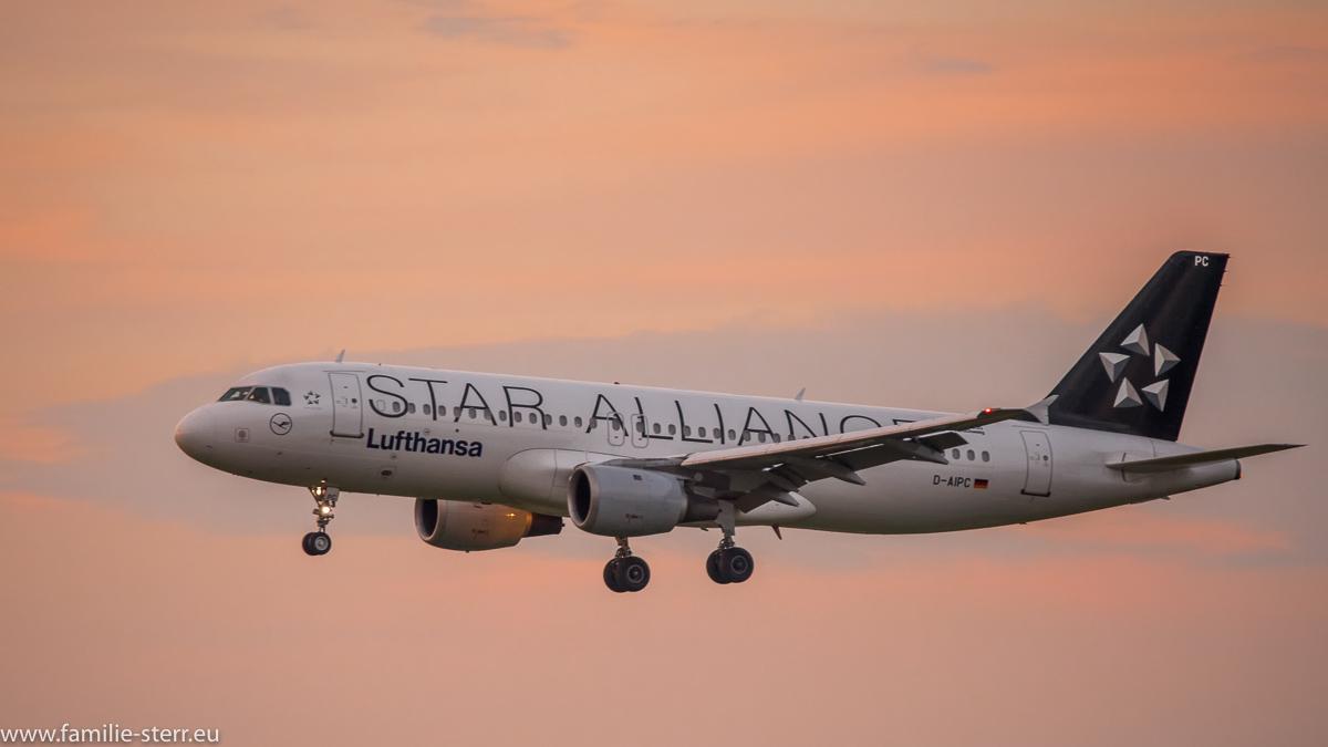 """Lufthansa Airbus A320-211 D-AIPC in """"Star Alliance""""-Bemalung im abendlichen Anflug auf München"""