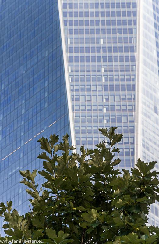 Baum vor der Fassade von One World Trade Center / Freedom Tower
