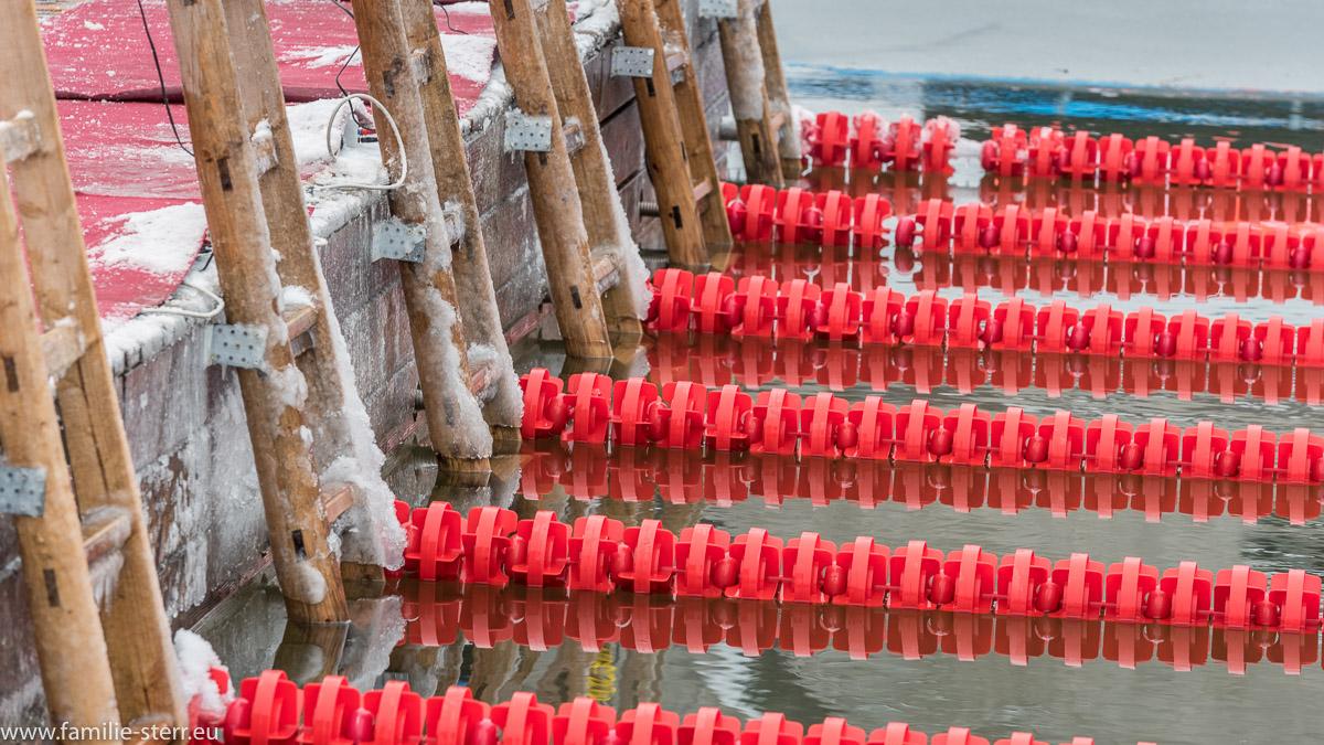 vereiste Leiter / Eisschwimmen am Wöhrsee in Burghausen 2017