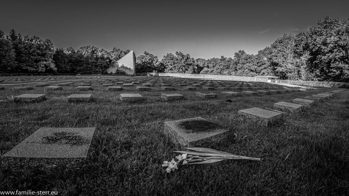 eine Blume vor einem einzelnen Gedenkstein in einer langen Reihe von Gräbern