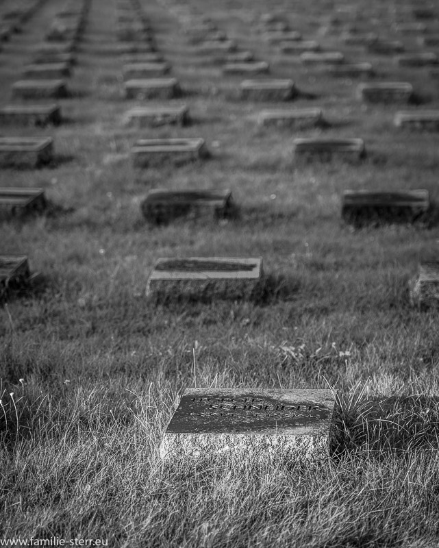 ein Sonnenstrahl beleuchtet einen einzelnen Gedenkstein in einer langen Reihe von Grabmalen