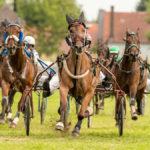 Traber auf der Gegengeraden beim Herbstfestrennen Erding 2017