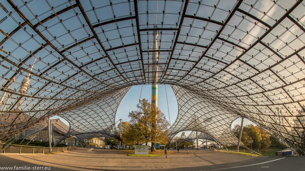Herbstlich gefärbter Baum unter dem Zeltdach im Olympiapark München