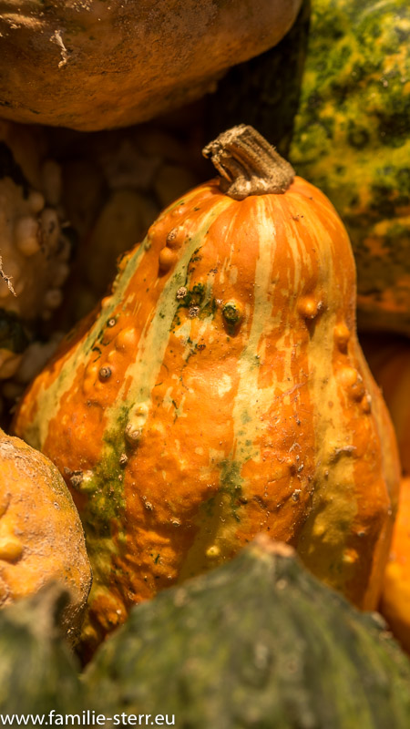 Zierkürbisse an einem Verkaufsstand für Halloween