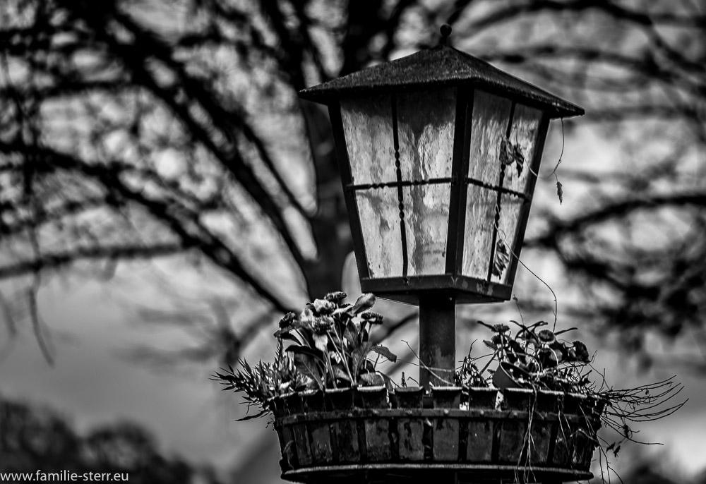 Lampe mit verblühter Dekoration im Hofgarten München