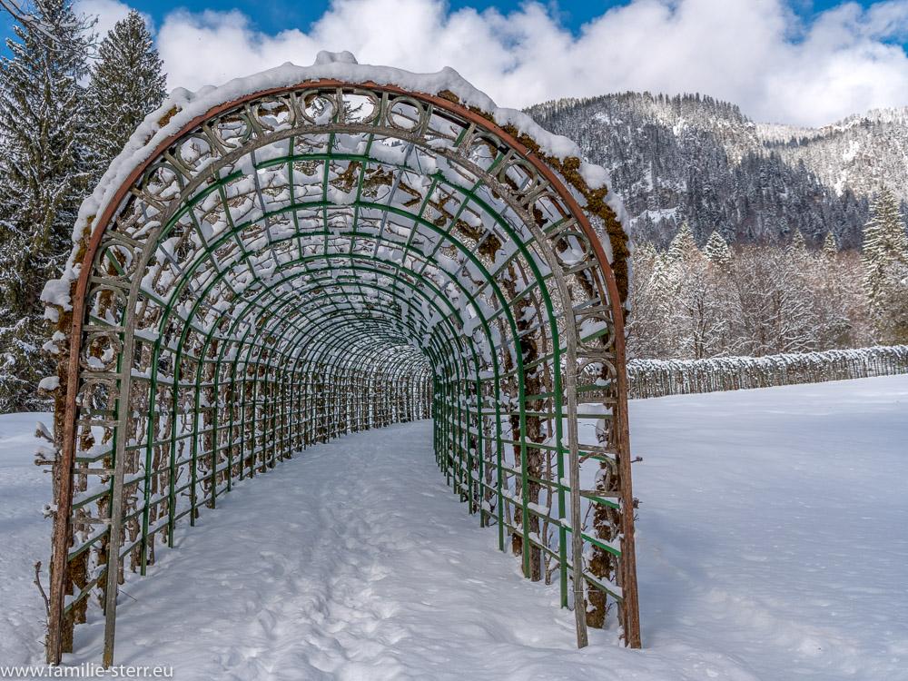 ein verschneiter Laubengang im Park hinter Schloss Linderhof