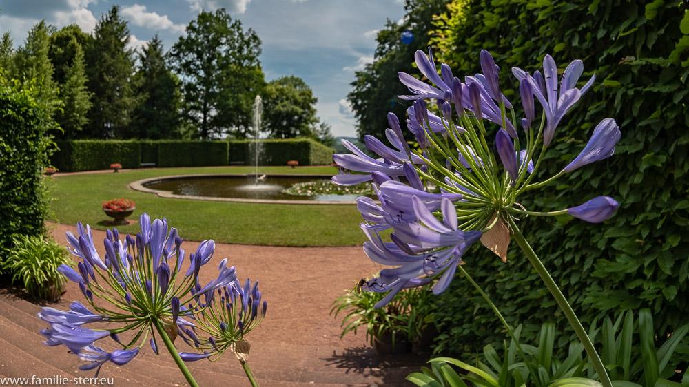 Blick durch ein paar Blüten auf das Kronenbassin im Park Schloss Lichtenwalde