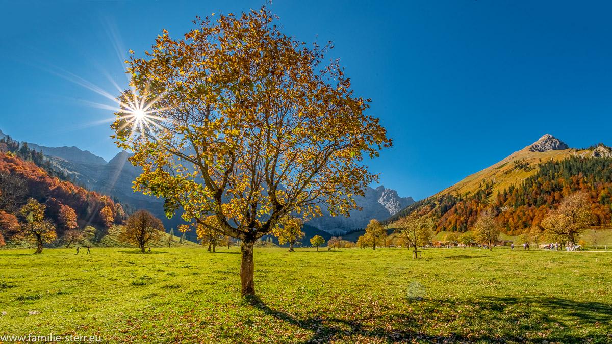 herzlich gefärbte Ahornbaum vor der strahlenden Herbstsonne
