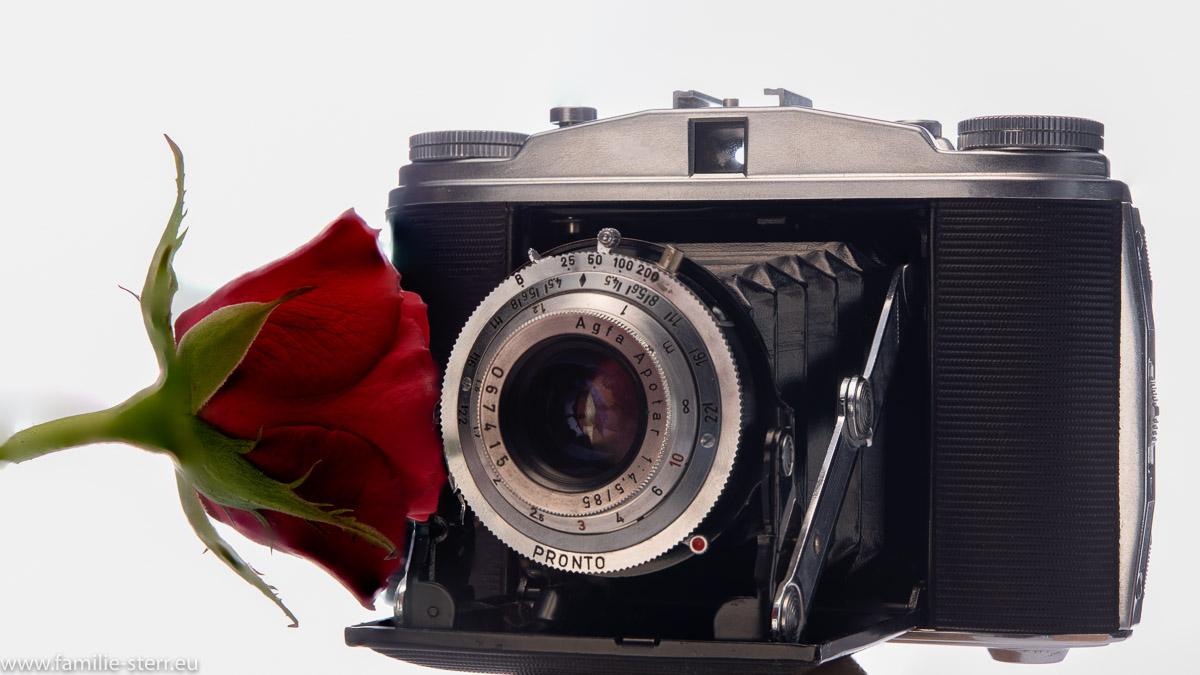 Agfa Isolette mit roter Rose als Motiv vor dem Objektiv