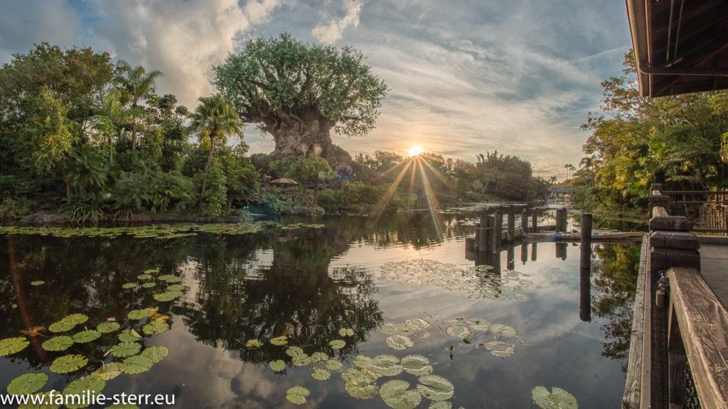 Strahlende Sonne neben dem Tree of Life in Animal Kingdom / Disney World / Florida