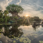 Strahlende Sonne neben dem Tree of Life in Animal Kingdom / Disney World / Florida