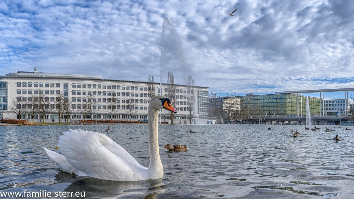 ein weißer Schwan im Messesee vor der neuen messe München