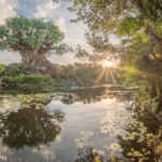 ein Sonnenuntergang am Tree of Life im Animal Kingdom, Disney World, Florida