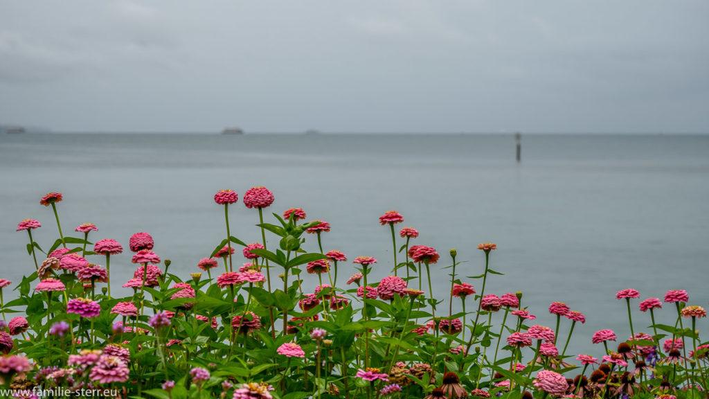Wolken und Regen am Bodensee / Insel Mainau