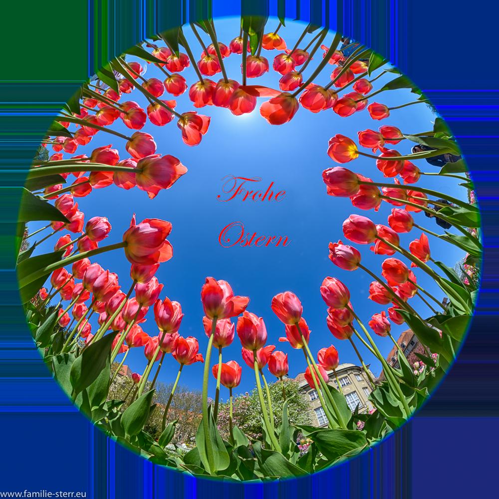 ein Kranz roter Tulpen als Ostergruß 2020