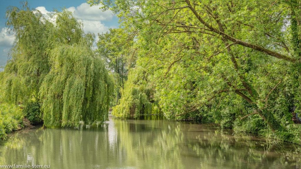 die Sempt in Altenerding in einem von Bäumen gesäumten Flussbett