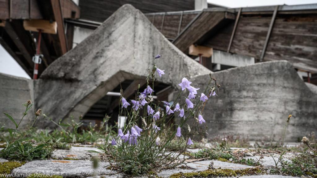 Blume bricht durch den Beton hinter der Tribüne an der Olympia - Regattastrecke in Oberschleißheim