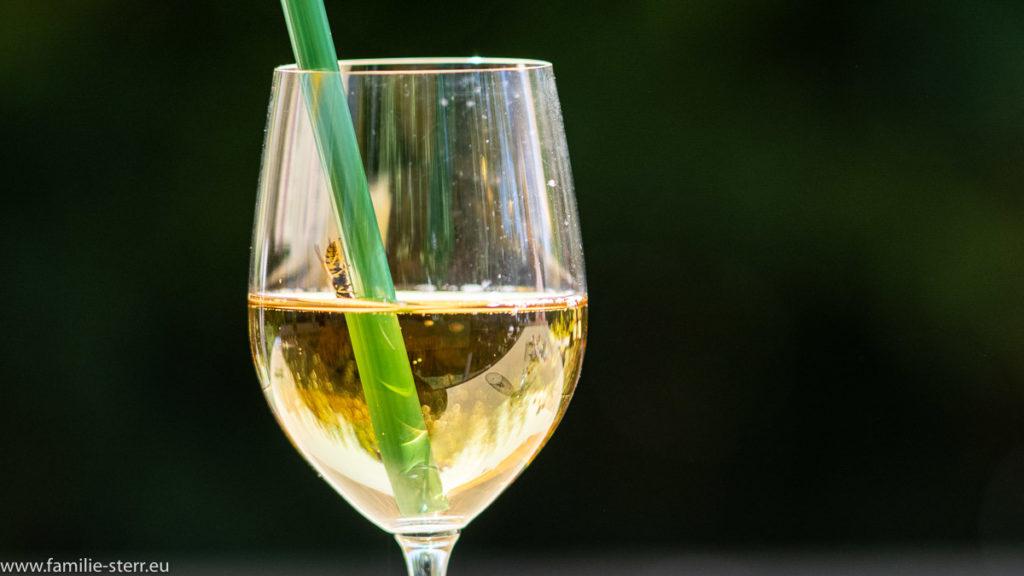 eine Wespe krabbelt an einem Strohhalm in ein Glas Lillet