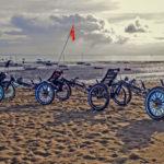 4 aneinandergehängte Hase Kettwiesel am Strand von Noirmoutier