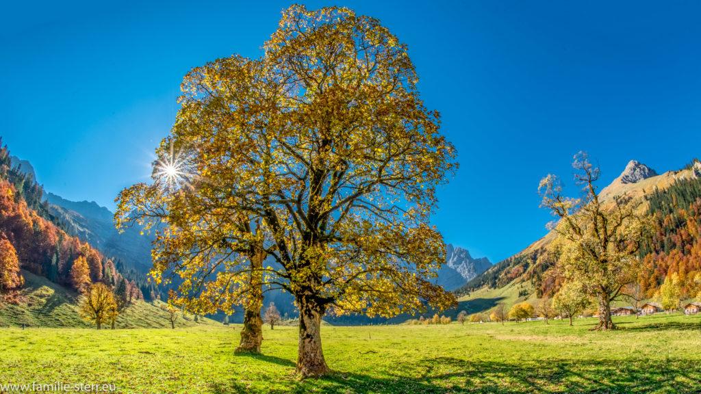 herbstlich verfärbter Ahornbaum vor der strahlenden Sonne im Großen Ahornboden beim Almdorf Eng