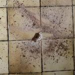 Fliesen mit eingeschlagenem Loch zur Bodenprüfung